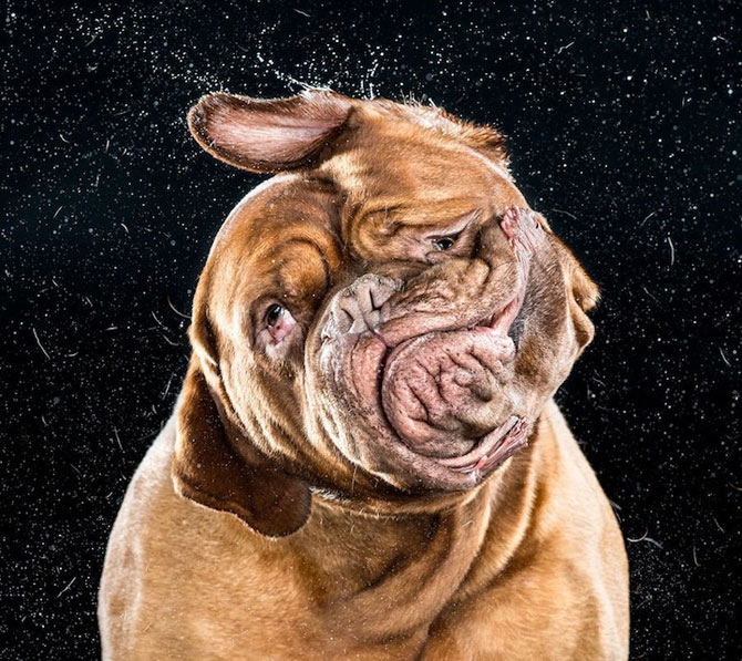 Haios: Portrete de caini care se scutura - Poza 4