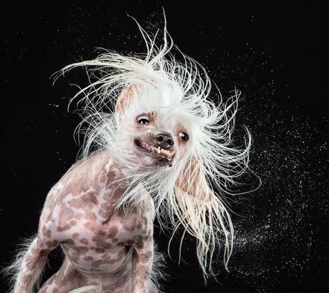 Haios: Portrete de caini care se scutura - Poza 6