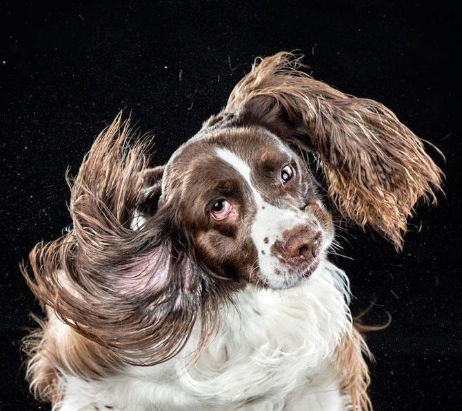 Haios: Portrete de caini care se scutura - Poza 7