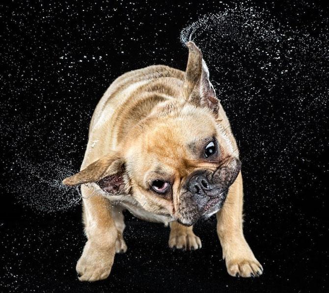 Haios: Portrete de caini care se scutura - Poza 10