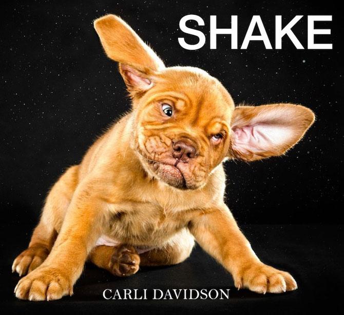 Haios: Portrete de caini care se scutura - Poza 11
