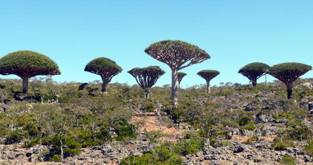 Cel mai bizar loc de pe planeta - Insula Socotra - Poza 5