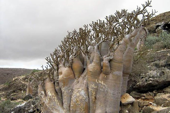 Cel mai bizar loc de pe planeta - Insula Socotra - Poza 10