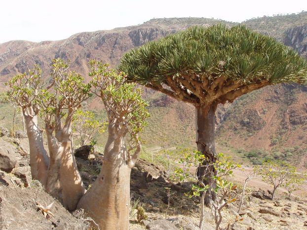 Cel mai bizar loc de pe planeta - Insula Socotra - Poza 12