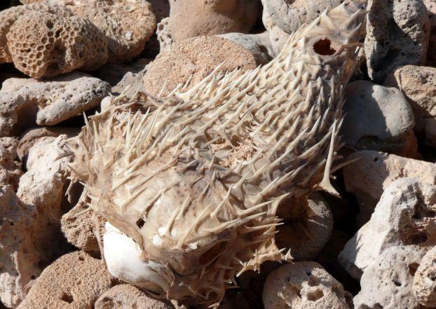 Cel mai bizar loc de pe planeta - Insula Socotra - Poza 13