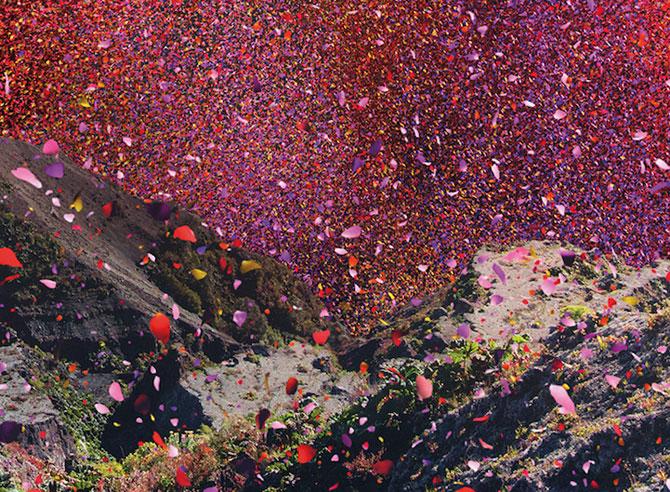 Costa Rica acoperita de petale pentru Sony Bravia - Poza 4