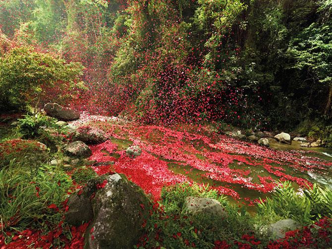 Costa Rica acoperita de petale pentru Sony Bravia - Poza 6