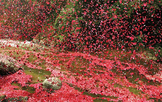 Costa Rica acoperita de petale pentru Sony Bravia - Poza 7