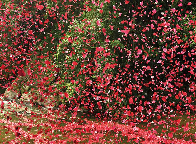 Costa Rica acoperita de petale pentru Sony Bravia - Poza 8