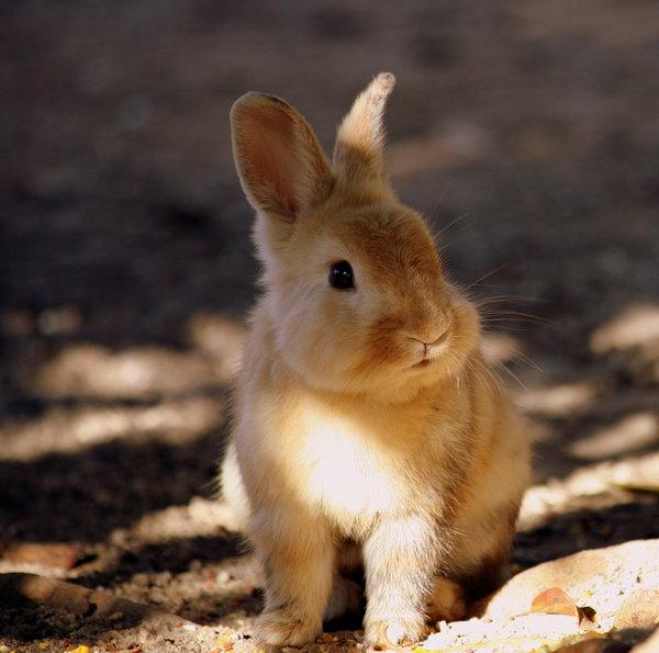 Atentie: Animale simpatice in 45 de poze! - Poza 39