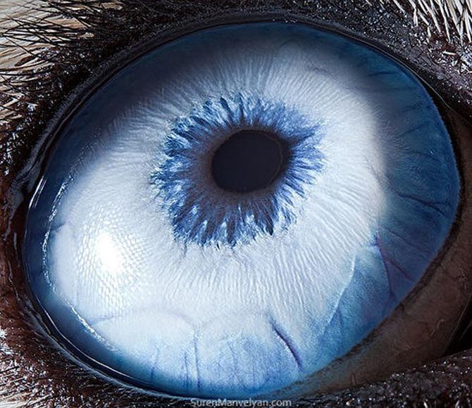 Harti oculare de Suren Manvelyan - Poza 1