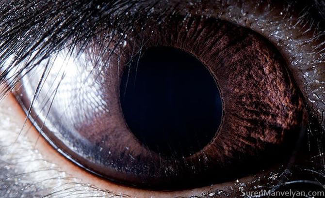 Harti oculare de Suren Manvelyan - Poza 2