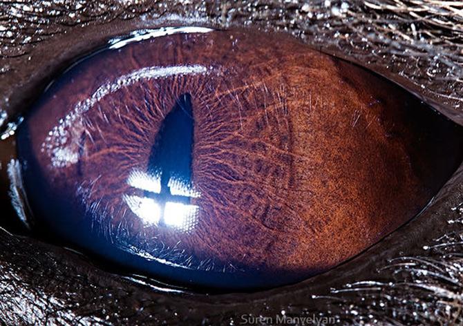 Harti oculare de Suren Manvelyan - Poza 3