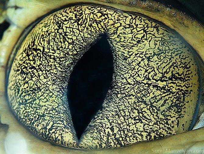 Harti oculare de Suren Manvelyan - Poza 5