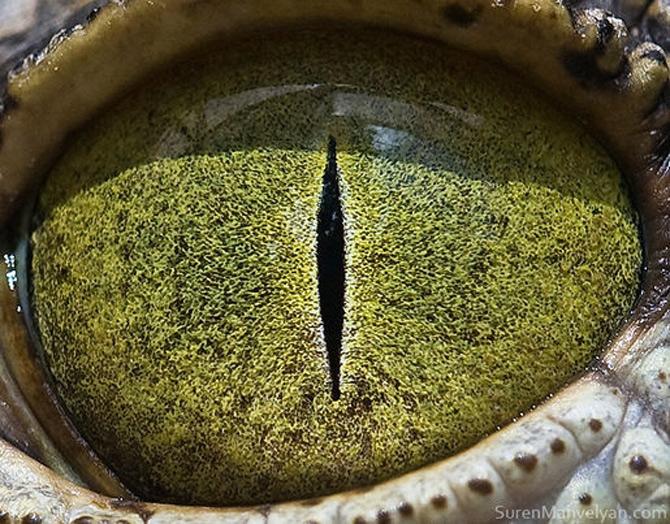 Harti oculare de Suren Manvelyan - Poza 6