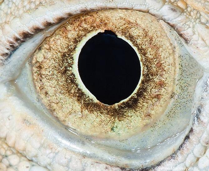 Harti oculare de Suren Manvelyan - Poza 7