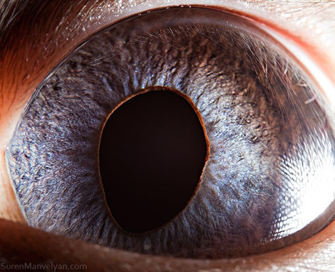 Harti oculare de Suren Manvelyan - Poza 8