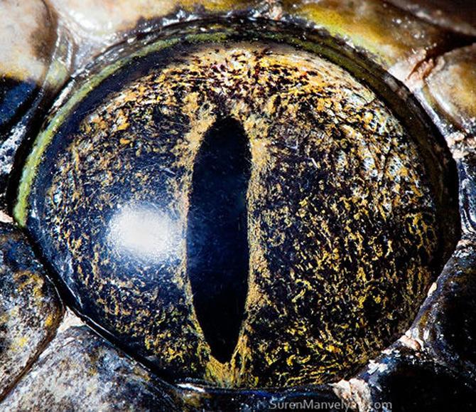 Harti oculare de Suren Manvelyan - Poza 9