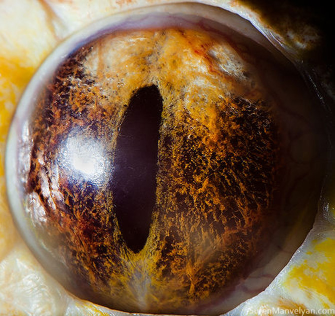 Harti oculare de Suren Manvelyan - Poza 11