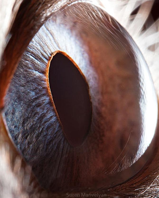 Harti oculare de Suren Manvelyan - Poza 12