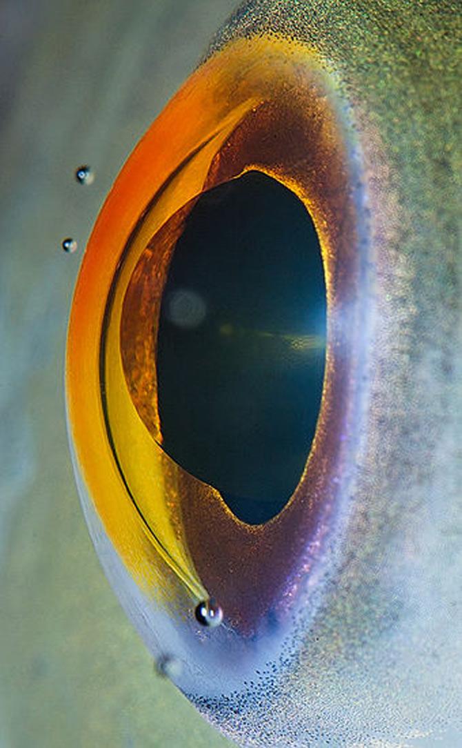 Harti oculare de Suren Manvelyan - Poza 13