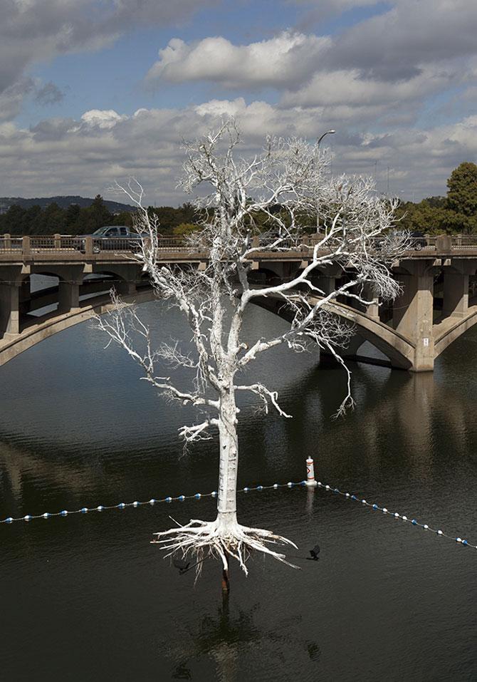 Copacul plutitor, din Austin, Texas - Poza 1