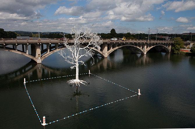 Copacul plutitor, din Austin, Texas - Poza 3