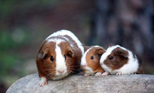 Atentie: Animale simpatice in 45 de poze! - Poza 40