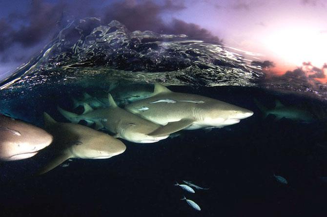 David Doubilet da glas oceanelor - Poza 1