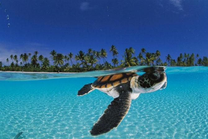 David Doubilet da glas oceanelor - Poza 2