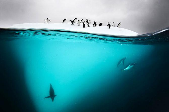 David Doubilet da glas oceanelor - Poza 3
