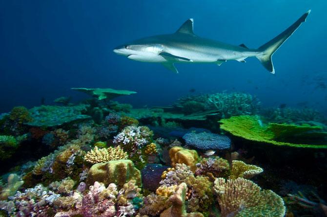 David Doubilet da glas oceanelor - Poza 4