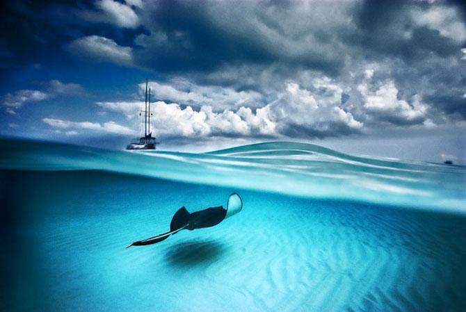 David Doubilet da glas oceanelor - Poza 5