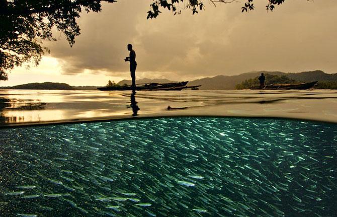 David Doubilet da glas oceanelor - Poza 6