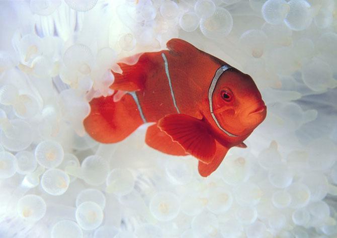 David Doubilet da glas oceanelor - Poza 7
