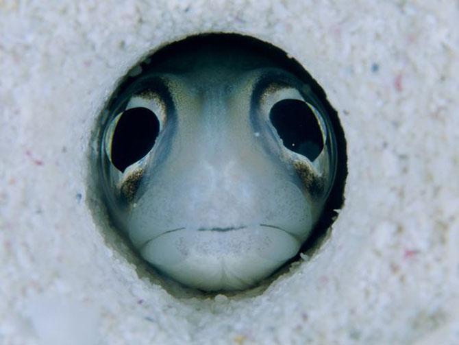 David Doubilet da glas oceanelor - Poza 11