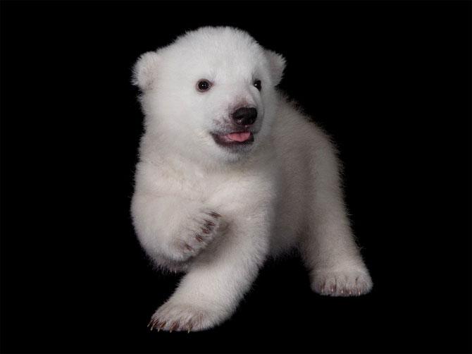 Luna, cea mai simpatica ursoaica - Poza 3