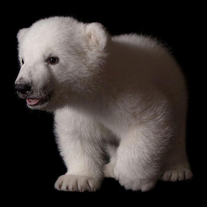 Luna, cea mai simpatica ursoaica - Poza 4