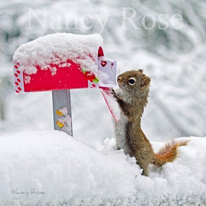 Mici aventuri cu veverite, de Nancy Rose - Poza 1