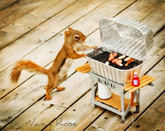 Mici aventuri cu veverite, de Nancy Rose - Poza 2
