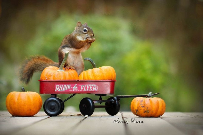 Mici aventuri cu veverite, de Nancy Rose - Poza 3