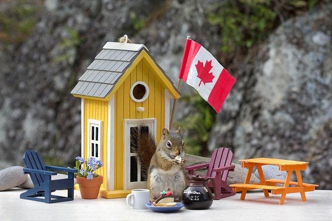 Mici aventuri cu veverite, de Nancy Rose - Poza 5