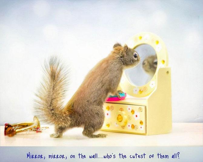 Mici aventuri cu veverite, de Nancy Rose - Poza 6