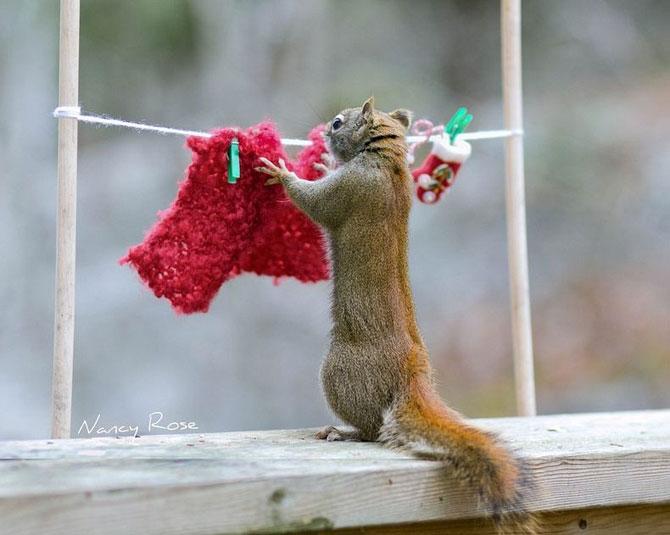 Mici aventuri cu veverite, de Nancy Rose - Poza 9
