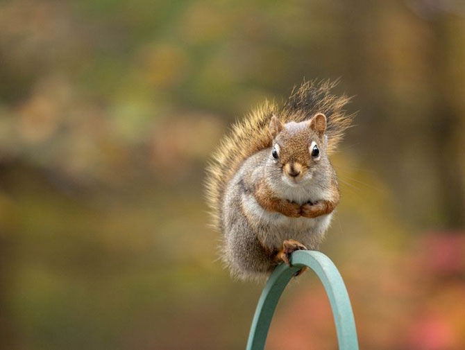 Mici aventuri cu veverite, de Nancy Rose - Poza 10