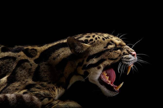 Vincent J. Musi si pisicile mari - Poza 2