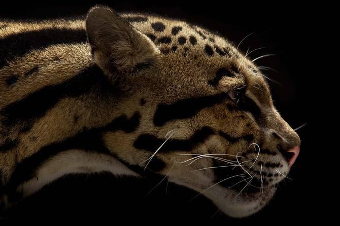 Vincent J. Musi si pisicile mari - Poza 4