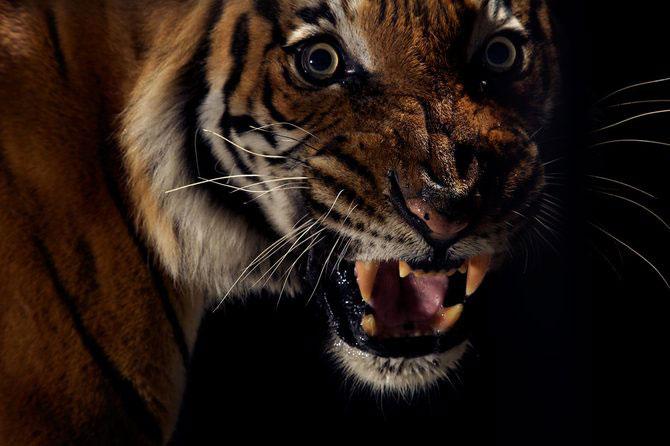 Vincent J. Musi si pisicile mari - Poza 7