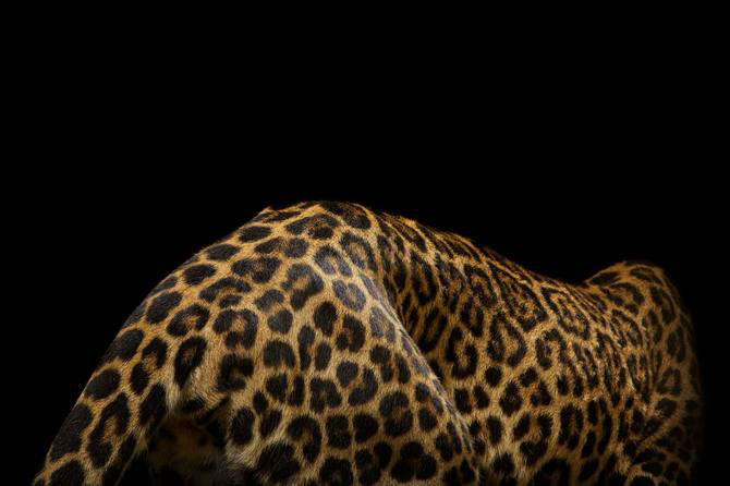 Vincent J. Musi si pisicile mari - Poza 9