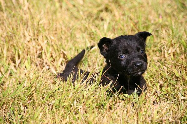 Atentie: Animale simpatice in 45 de poze! - Poza 41